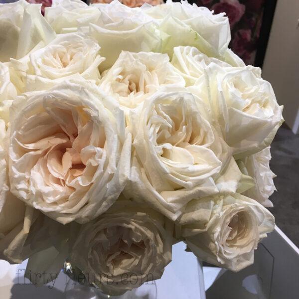 White O'Hara garden roses by Alexandra Farms
