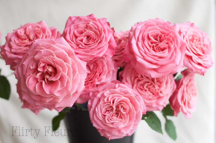 Ashley Garden Roses grown by Alexandra Roses, photographed by Flirty Fleurs