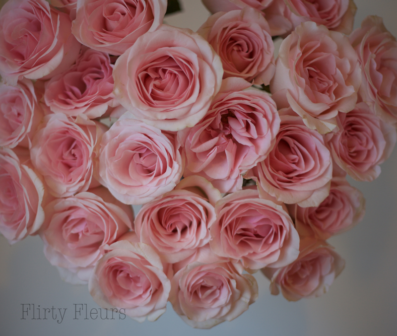 Flirty Fleurs Pink Rose Study with Roses from Amato Wholesale - Day 3 - Novia