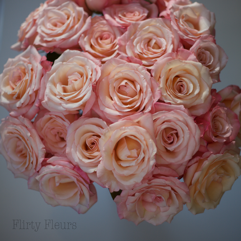 Flirty Fleurs Pink Rose Study with Roses from Amato Wholesale - Day 3 - Sexy Pink Roses