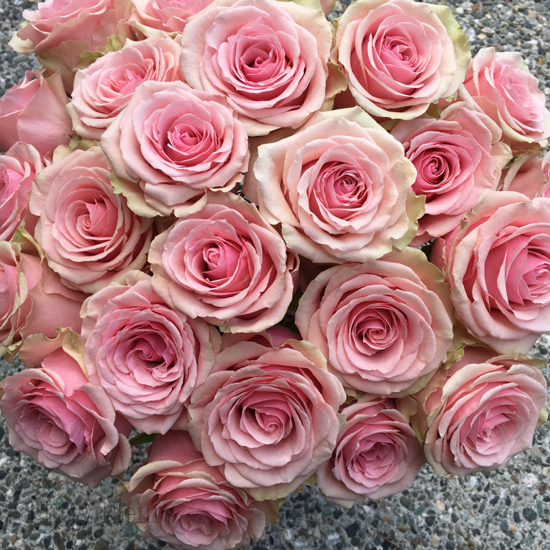 Pink Rose Study With Amato Wholesale Flirty Fleurs The Florist Blog Inspiration For Floral