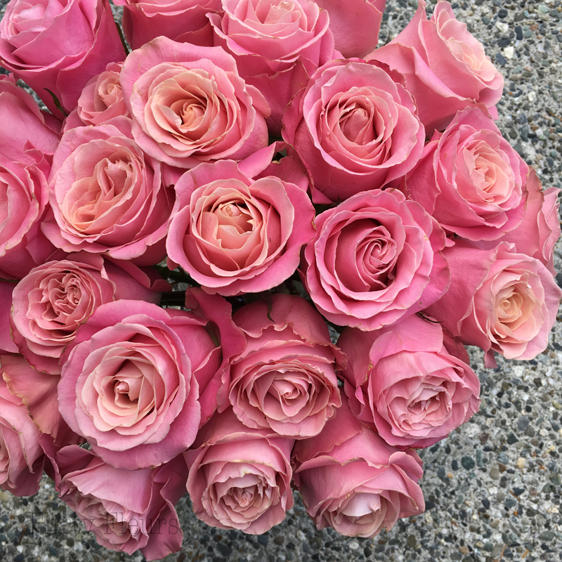 Flirty Fleurs Pink Rose Study with Roses from Amato Wholesale - Day 5 - Hermosa