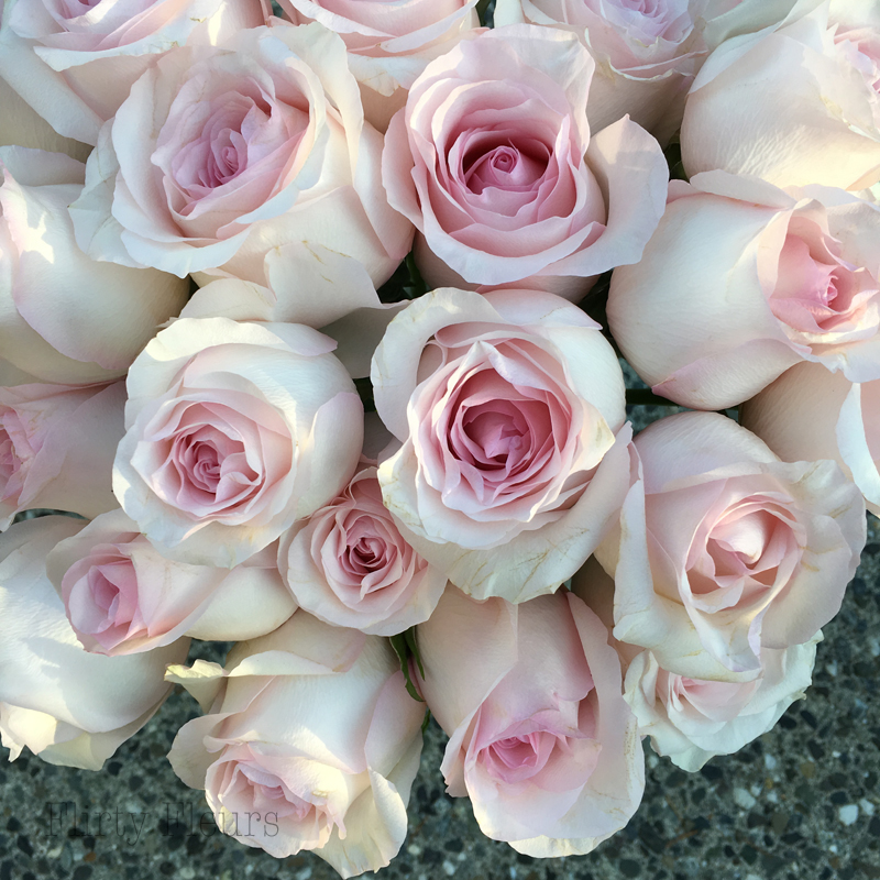 Flirty Fleurs Pink Rose Study with Roses from Amato Wholesale - Day 5 - Nena