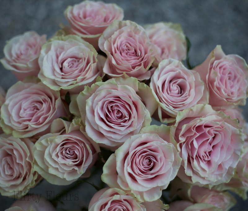 Flirty Fleurs Pink Rose Study with Roses from Amato Wholesale - Day 5 - Pink Mondial