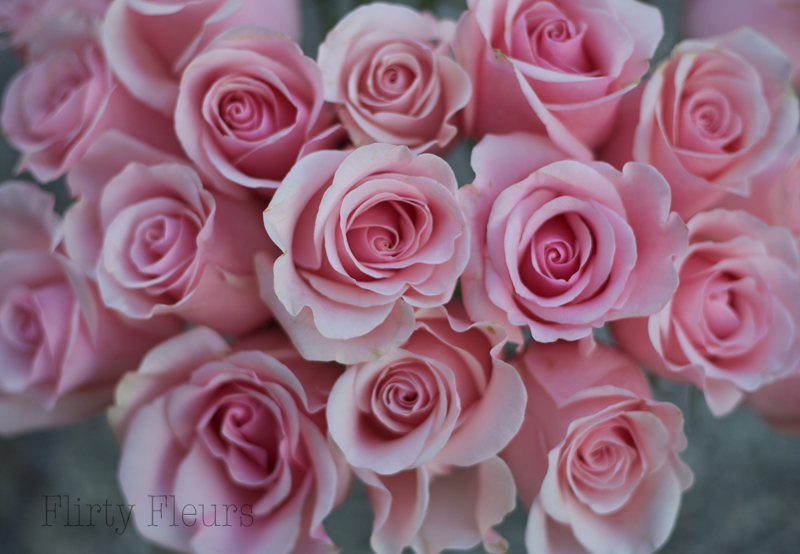 Flirty Fleurs Pink Rose Study with Roses from Amato Wholesale -  Day 5 - Titanic