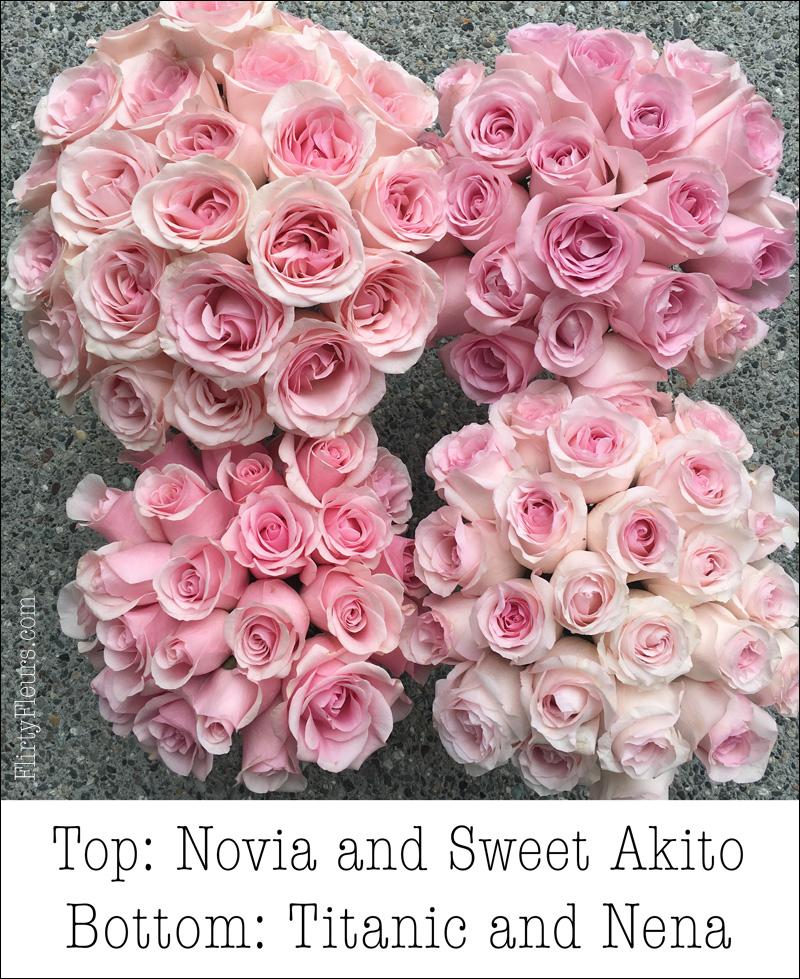 Flirty Fleurs Pink Rose Study - Sweet Akito, Sexy Pink, Novia, Hermosa, Geraldine, Pink Mondial, Titanic, Sweet Akito, Sophie, Nena, Jessica