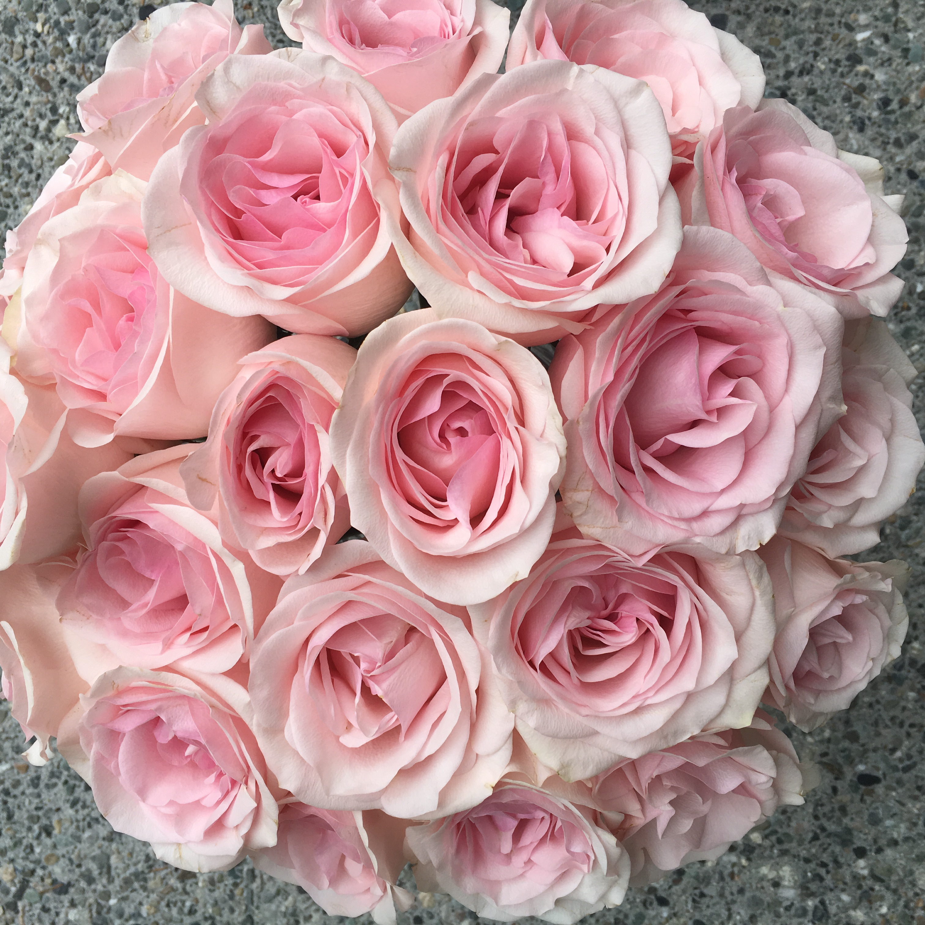 Flirty Fleurs Pink Rose Study with Roses from Amato Wholesale - Day 6 - Novia