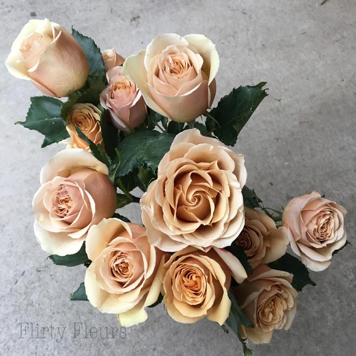 Golden Mustard Garden Roses grown by Alexandra Roses, Photographed by Flirty Fleurs
