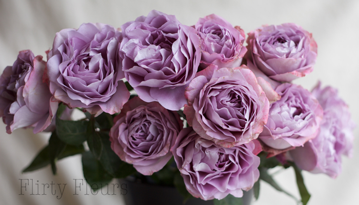 Lavender Bouquet Garden Roses grown Alexandra Roses, photography by Flirty Fleurs