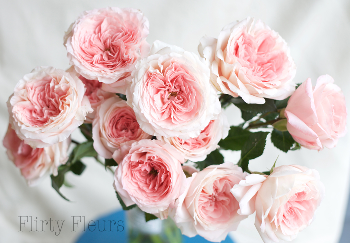 Mayra's Bridal Pink Garden Roses from Alexandra Roses, Photographed by Flirty Fleurs