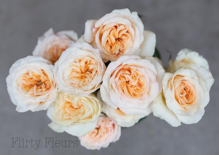 Ordinaire Peaches U0026 Cream Garden Roses Grown By Alexandra Roses, Photographed By  Flirty Fleurs
