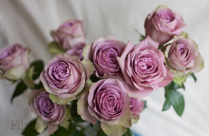 Tiara Garden Roses Grown by Alexandra Roses, Photographed by Flirty Fleurs