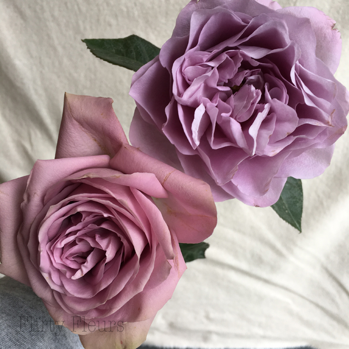 Tiara and Lavender Bouquet grown by Alexandra Roses, photographed by Flirty Fleurs