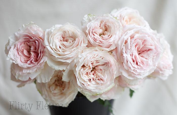 Tsumugi garden rose grown by Alexandra Roses, Photographed by Flirty Fleurs