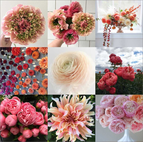 ranunculus, dahlias, peonies, garden roses - on flirty fleurs flower blog