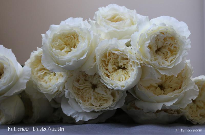 The white garden rose study with alexandra farms flirty fleurs the flirty fleurs rose study alexanda garden roses david austin patience mightylinksfo