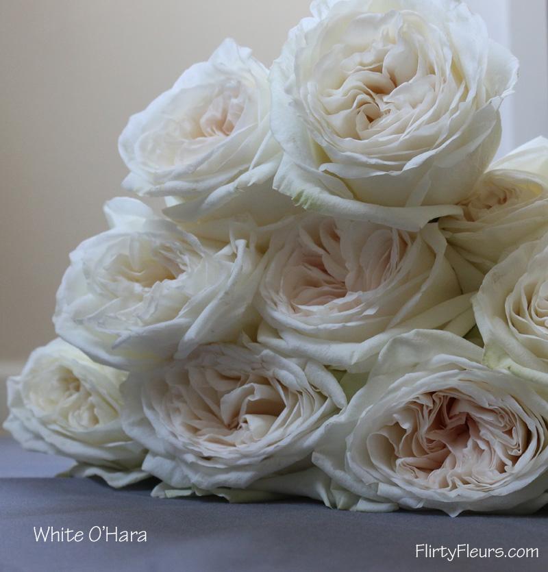 Flirty Fleurs Rose Study   Alexanda Garden Roses   White Ou0027hara Garden Rose