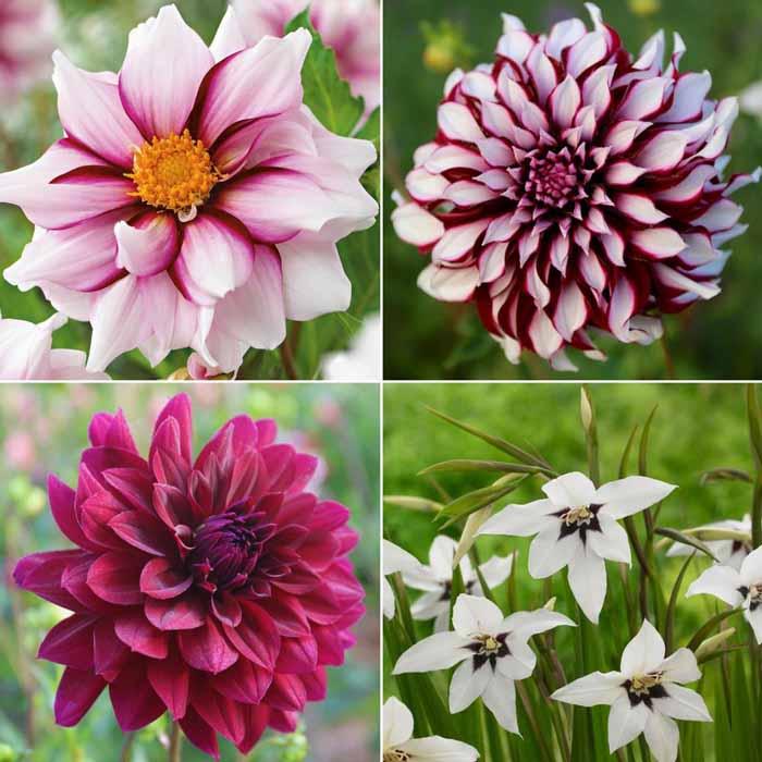 Flirty Fleurs The Florist Blog: Flirty Fleurs Collections With Longfield Gardens