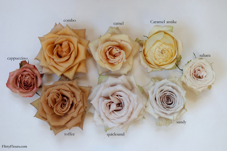 Brown Rose Color Study With Mayesh Whole Flirty Fleurs