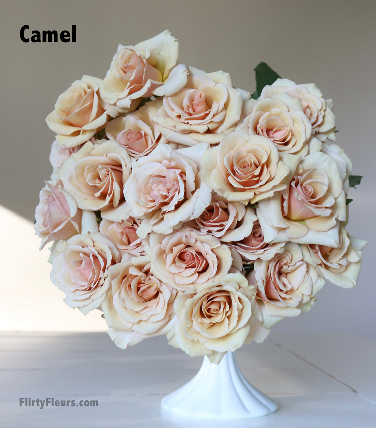 Flirty Fleurs Rose Study - Camel - pale peach rose - beige to brown rose color study with Mayesh and flirty fleurs