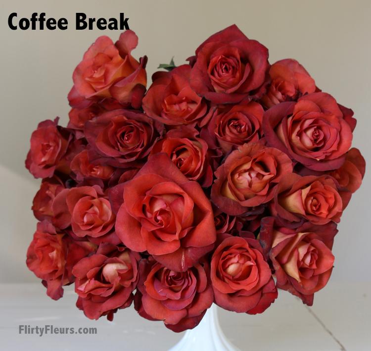Flirty Fleurs Rose Study - Coffee Break Brown Rose Study - Beige to Brown Rose Color Study with Flirty Fleurs and Mayesh Wholesale