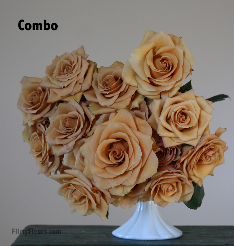 Flirty Fleurs Rose Study - Combo - Beige to Brown Rose Color Study with Flirty Fleurs and Mayesh Wholesale