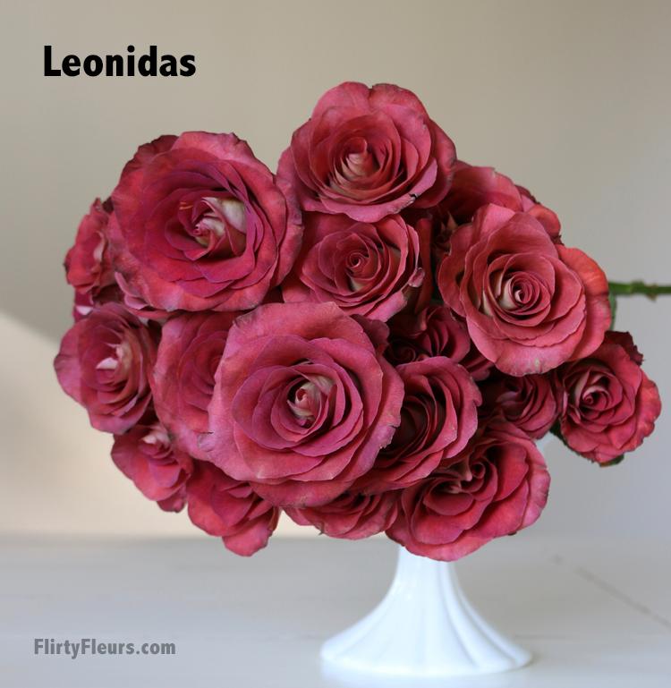 Flirty Fleurs Rose Study - Leonidas Brown Rose Study - beige to brown rose color study with flirty fleurs and mayesh wholesale