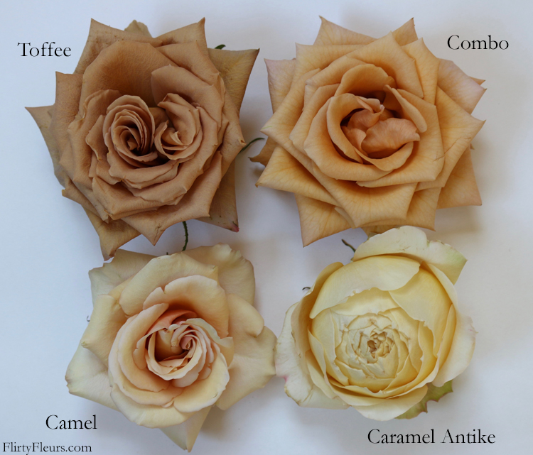 Flirty Fleurs Rose Study - Toffee Combo Camel Caramel Antike Browk Rose Study - with roses from Mayesh Wholesale