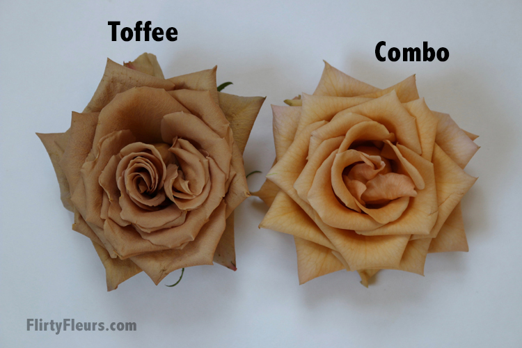 Flirty Fleurs Rose Study - Toffee and Combo Brown Roses - with roses from Mayesh Wholesale