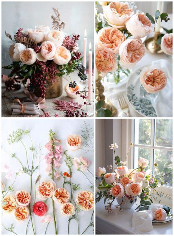 David Austin Juliet - Peach Garden Rose