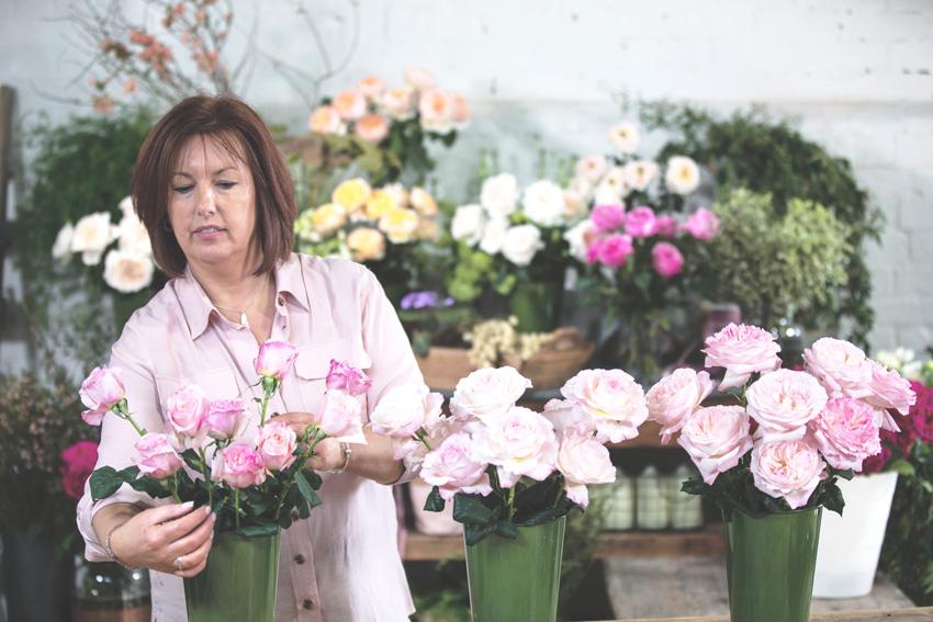David Austin Garden Roses - Care and Handling